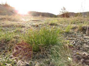 16 green grass (Spring – sort of!)