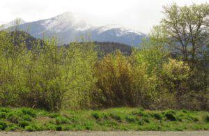 1 greening of GC best (The Greening of Ginty Creek)