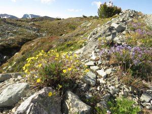 4 wild garden (Perkins Peak Conquered!)