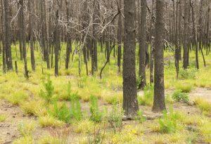 6b new forest (Kleena Kleene Waterfall Again)