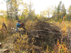 22 building brush piles (Fire-smarting ginty creek)